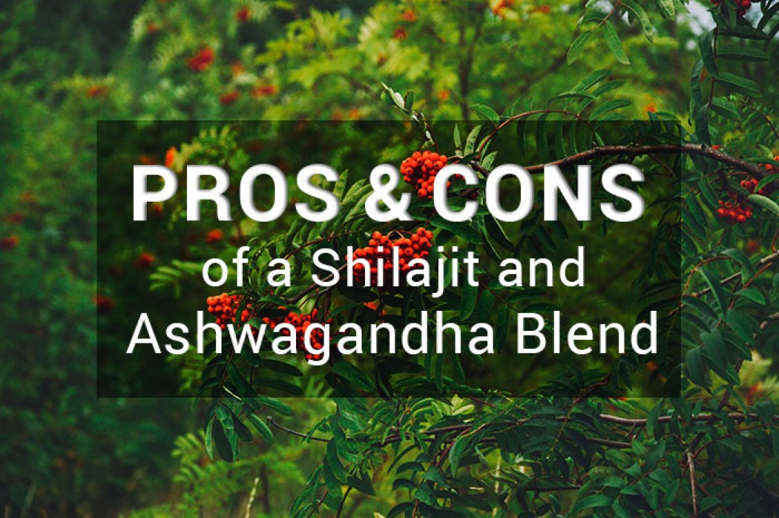 Pros and cons of blending Ashwagandha with shilajit.