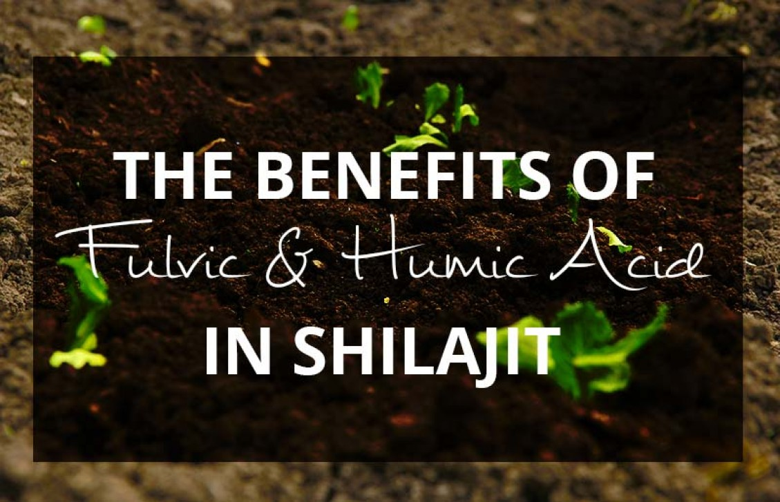 Fulvic and Humic Acid in Shilajit